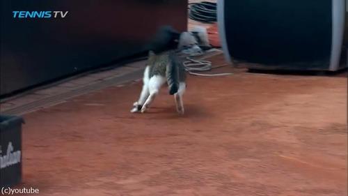 テニスの試合に猫が乱入04