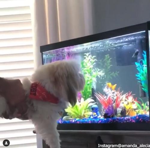 愛犬に水槽を見せたら…01