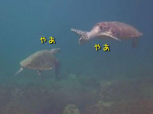 海亀のハイタッチ01
