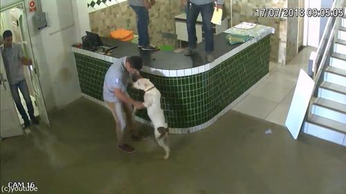 ブラジルの労働者たちが動物から逃げ惑う08