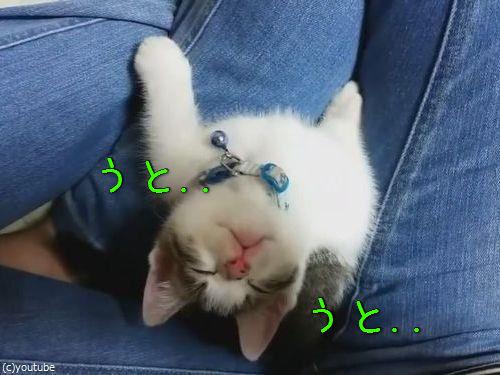 子猫が上を向いて寝落ち00