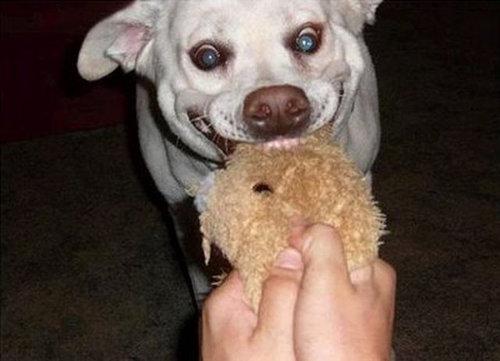 犬の表情10