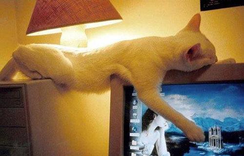 どこでも眠る猫08