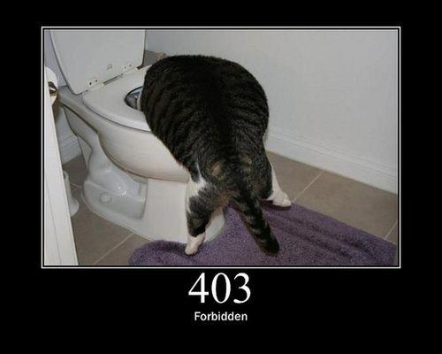 猫でHTTPステータスコード08