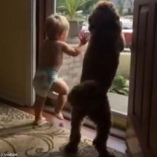 赤ちゃん&犬「パパが帰ってきた!」02