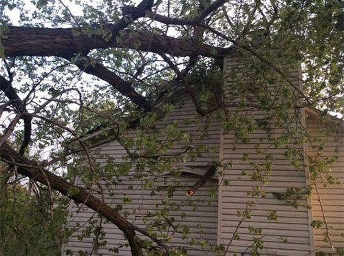 大木が倒れてきた03