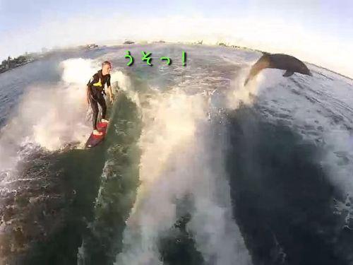 サーフィン中にイルカ