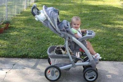 パグと赤ちゃん06