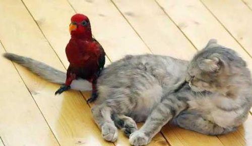 インコと猫20