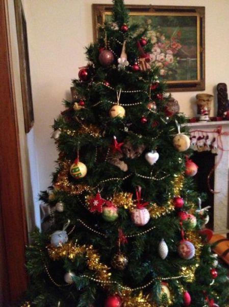 クリスマスとペット10