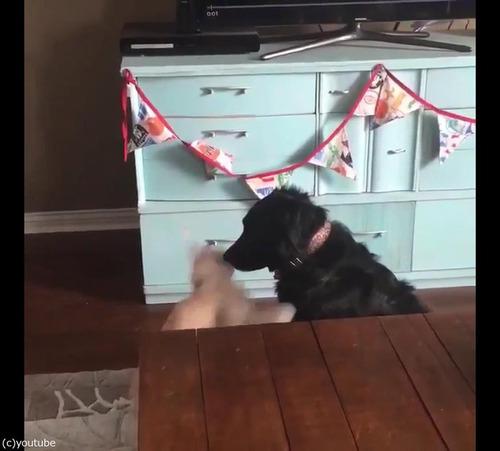 猫が犬に大胆な愛の告白04