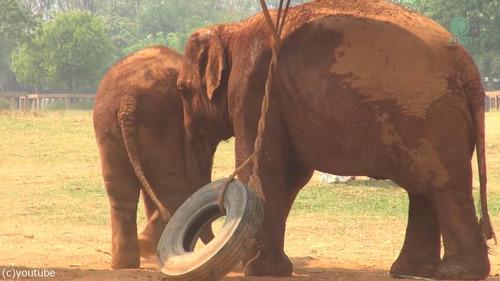 子ゾウ「もっと遊びたい!」母ゾウ「ご飯の時間よ!」05