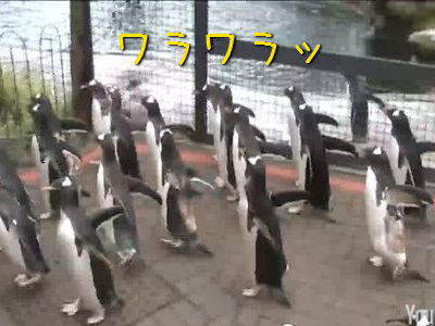 ダースベイダー・ペンギン