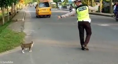 警官が猫を誘導する様子に和む01