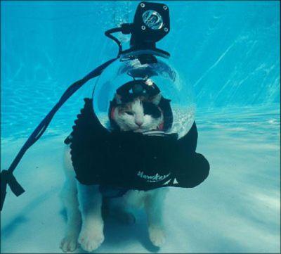 泳ぐ猫15