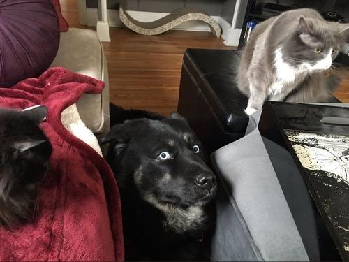 犬と猫の仲がよろしくないとき12