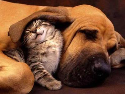 犬と猫なかよしTOP