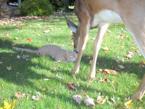 鹿と猫00