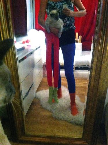 足の長い猫グッチ02