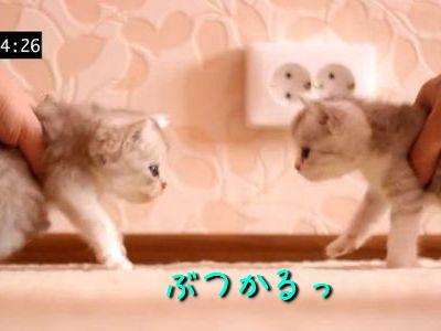 子猫と子猫の衝突実験