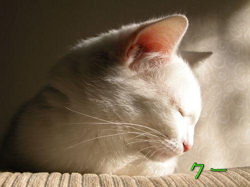 どこでも眠る猫00