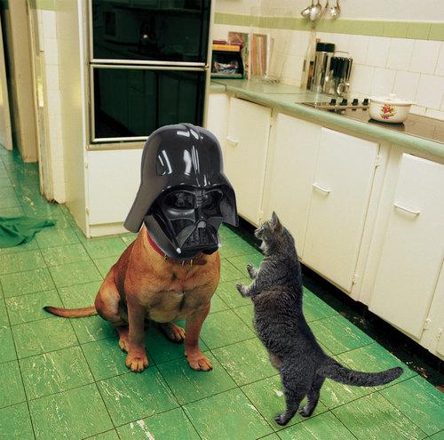 犬に猫マスク09