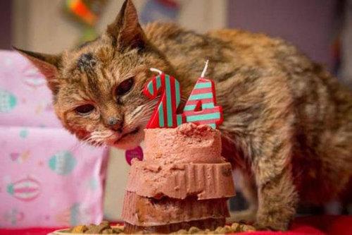 最高齢の猫01