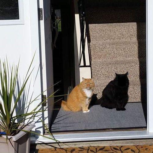 「この猫の名前はシャドーにしたほうがいい」01