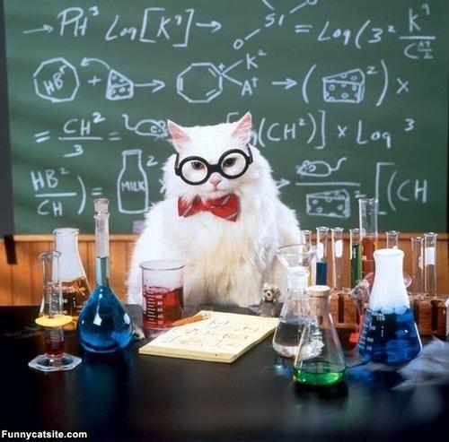 メガネ猫21