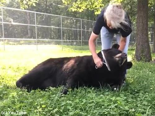 ブラッシング大好きな熊さん00