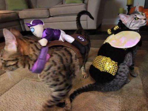 猫のコスプレ00