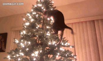 猫が狙っているもの03