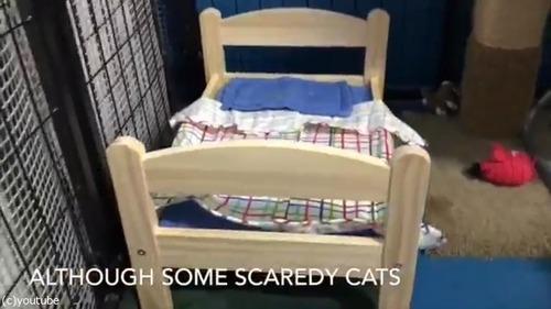 猫にピッタリのベッドを寄付した結果04