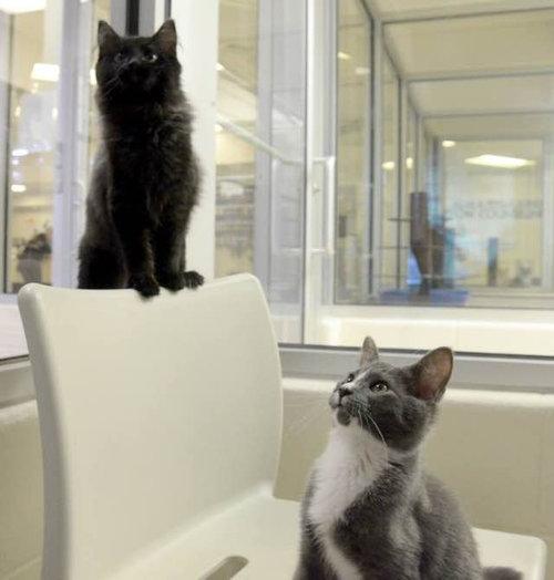 盲目の猫を黒猫が世話04