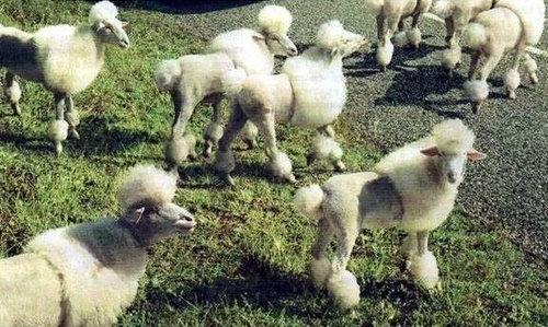 羊飼いの楽しみ06