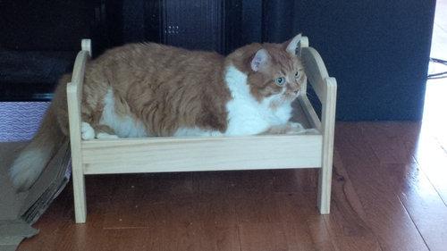 猫ベッド10