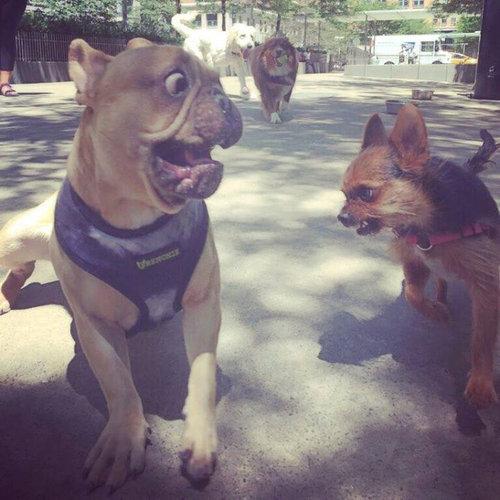マンガみたいな表情の犬01