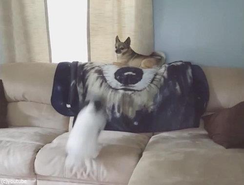 ソファの上の犬が消える03