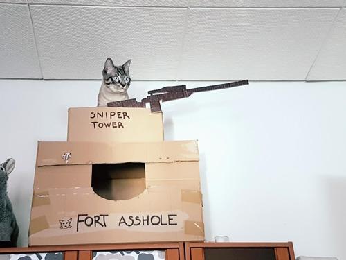 猫の隠れ家01