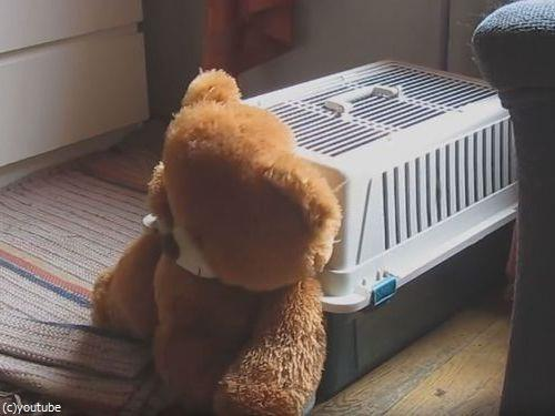 クマのぬいぐるみと一緒じゃないと昼寝をしない犬07