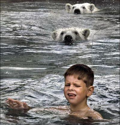 シロクマと泳ぐ02