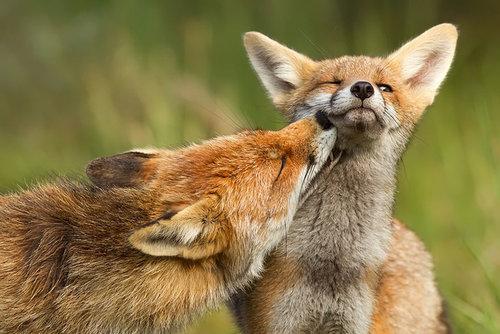 動物たちのキス11