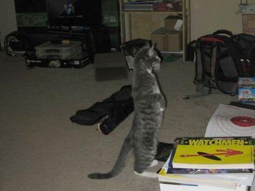 猫が鳥を見るポーズ11