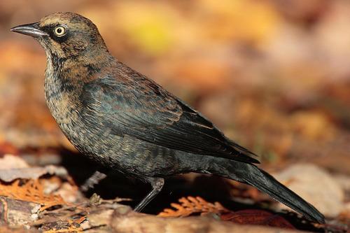 テキサス州の鳥の問題01