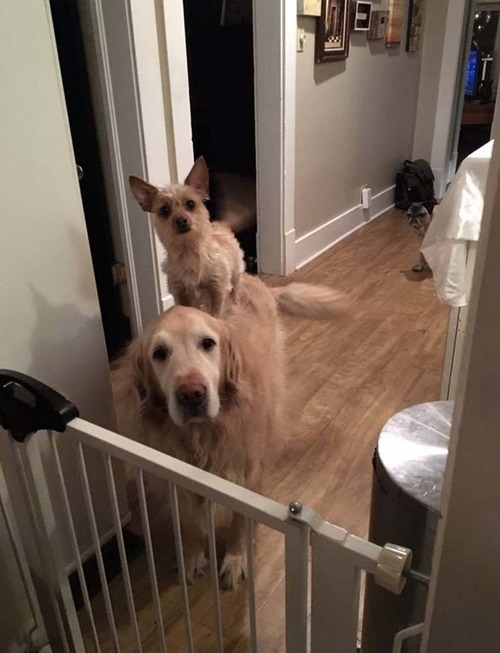 犬2匹のおねだり方法04