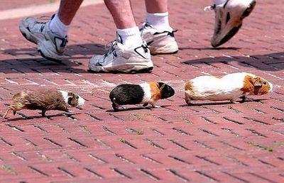 街中に現れた動物たち01