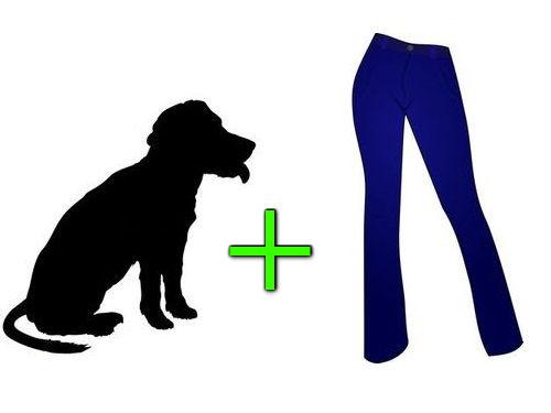 ちょっと考え込んでしまう犬とズボンの疑問00