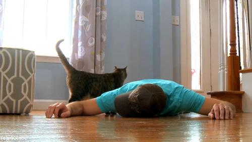 猫の前で死んだふり05