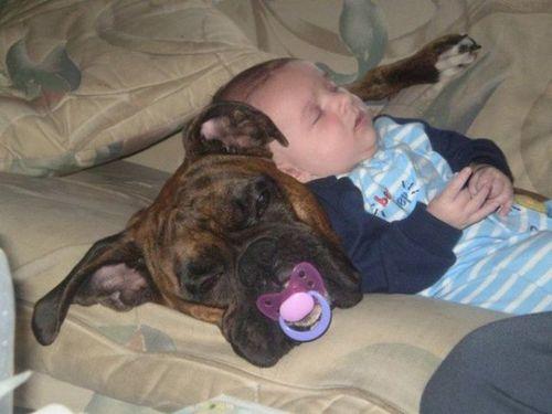 ペットと赤ちゃん14