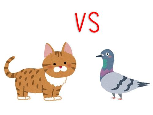 ハト vs 猫の高まる緊張感